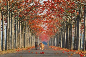 Allee-coton-Taiwan