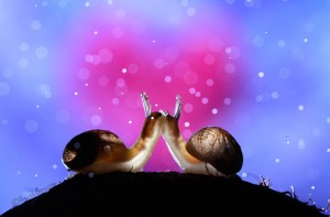 Amour d'escargots-Nadav Bagim