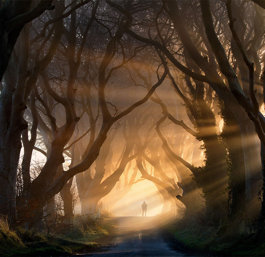Dark-Hedges-Irlande