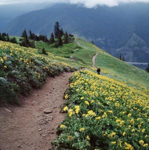 Dog-mountain-montagnes-Whashington-USA