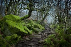 Gorges-Padley-peak-district-Angleterre