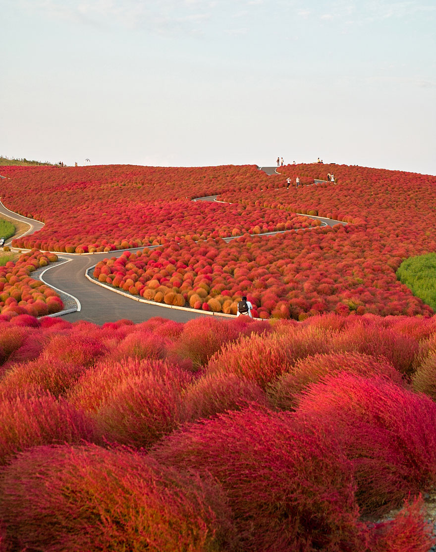 Hitachi-seaside-park-Japon