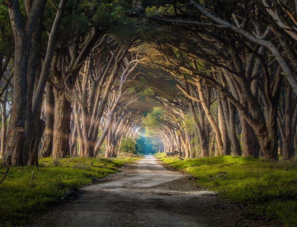 28 magnifiques chemins bucoliques