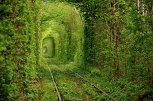 Tunnel-vegetal-amour-Ukraine