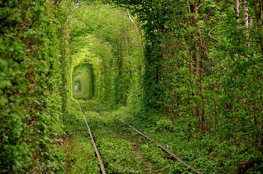 Tunnel-vegetal-amour-Ukraine