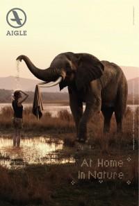 aigle elephant