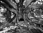 arbre-ville-urbain-small