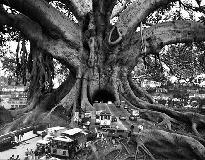 arbre-ville-urbain