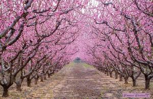 arbres-fleurs-printemps