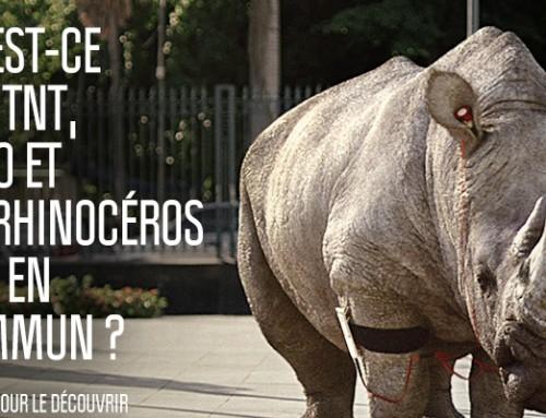 Comment se prendre pour un rhinocéros avec de la boisson TNT ?