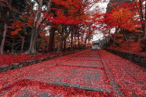 chemin-automnal-Kyoto-Japon