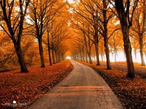chemin-automne
