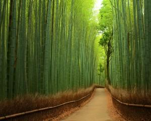 chemin-bambou-Kyoto-Japon