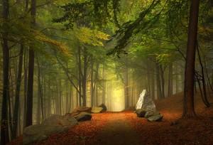 chemin-forestier-Baviere-Allemagne