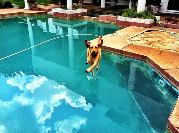 chien-marche-eau-piscine