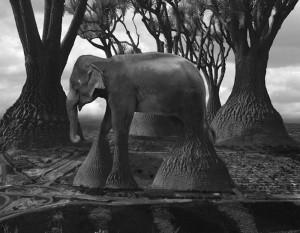 elephant-arbre