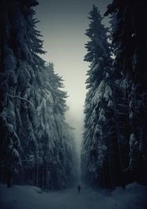 foret-hiver-republique-tcheque