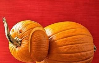 halloween-citrouille-jack-o-lantern-elephant-enfantin
