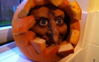 halloween-citrouille-jack-o-lantern-visage-sortant-citrouille-eclatee