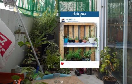 instagram-verite-intox-photos-chompoo-baritone-cactus-etagere-presentoir