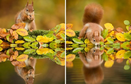 magie-automnale-ecureuil-roux
