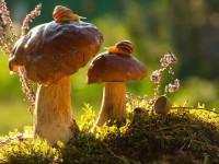 magie-automnale-escargots-soleil-champignons