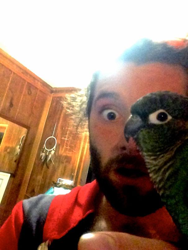 visage-homme-perroquet