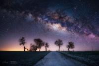 voie-lactee-etoilee-desert-arbres